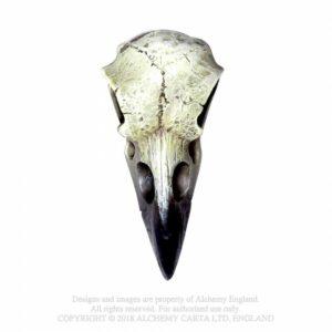mini crâne de corbeau